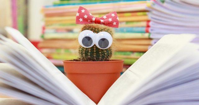 cactus-1063094_960_640